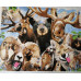 Kit pictura pe numere cu animale, DTP2445
