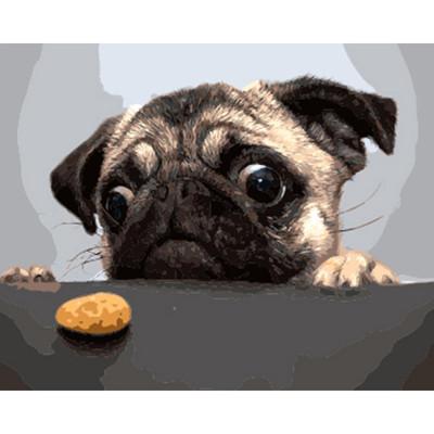Kit pictura pe numere cu animale, Pug Life