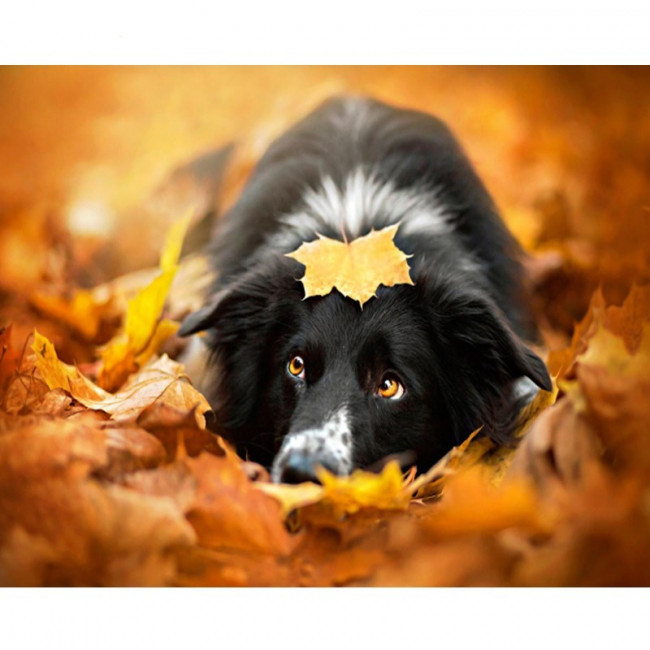Kit pictura pe numere cu animale, Eyes of Autumn