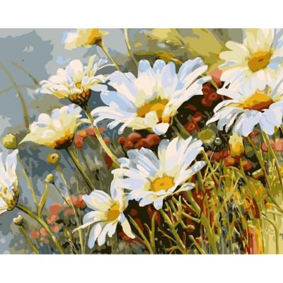 Kit pictura pe numere cu flori, A field of daisies