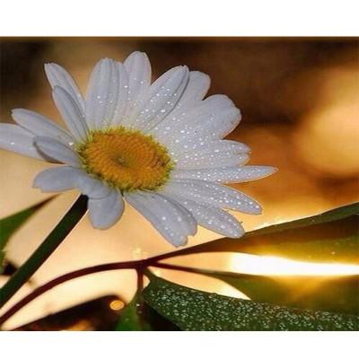 Kit pictura pe numere cu flori, Daisy