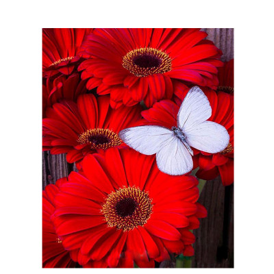 Kit pictura pe numere cu flori, Red jerbera