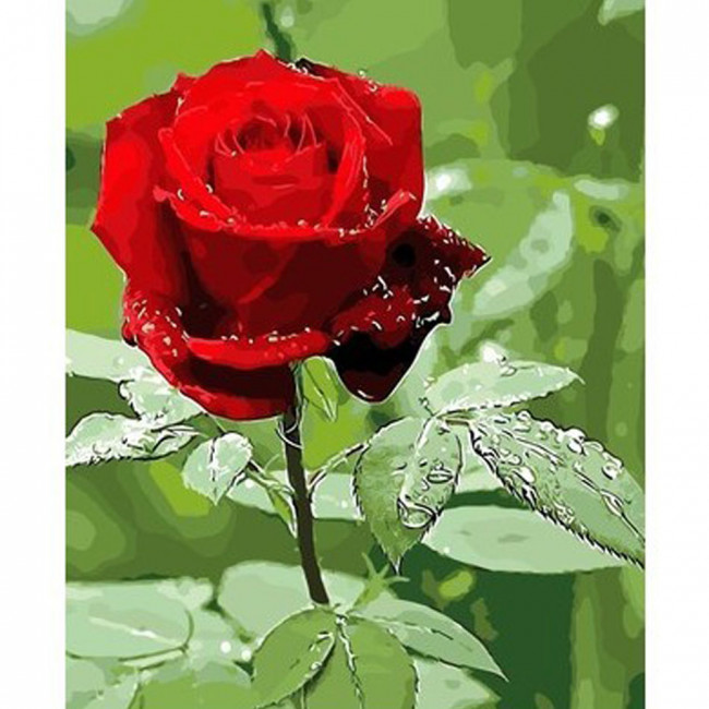 Kit pictura pe numere cu flori, Raindrops on a Red Rose