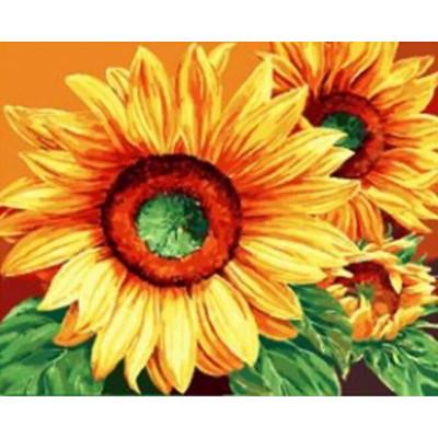 Kit pictura pe numere cu flori, DTP1819