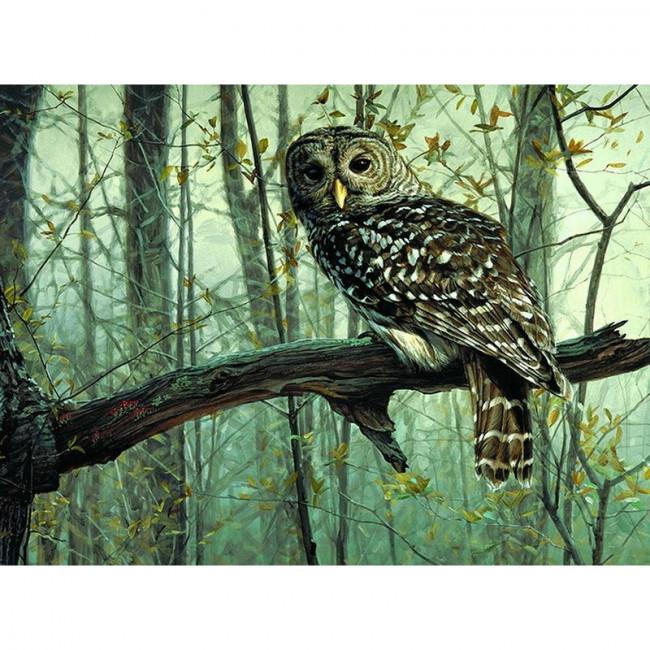 Kit pictura pe numere cu pasari, Staring Owl