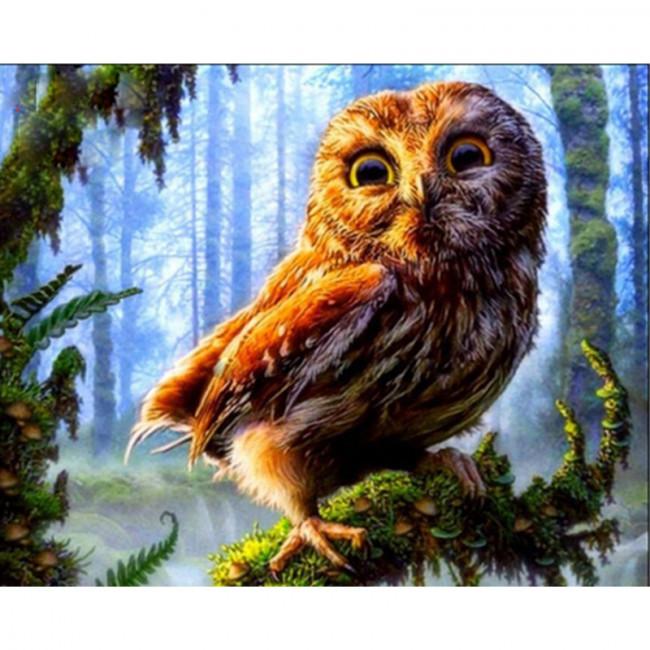 Kit pictura pe numere cu pasari, Surprised Owl