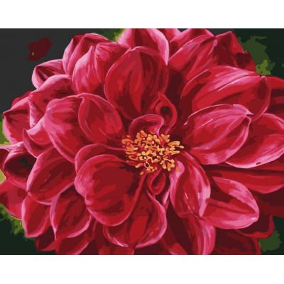 Kit pictura pe numere cu flori, NDTP-566